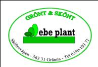 Ebe plant
