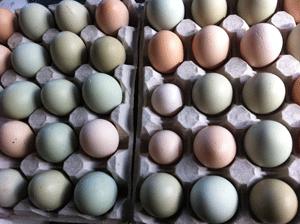 egg Drefseryd