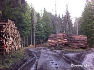 skog2013